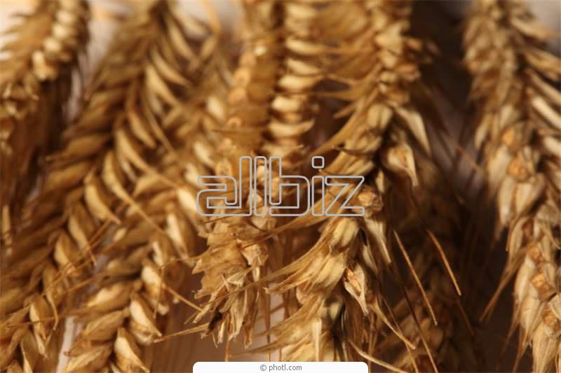 Купить Сельскохозяйственные продукты