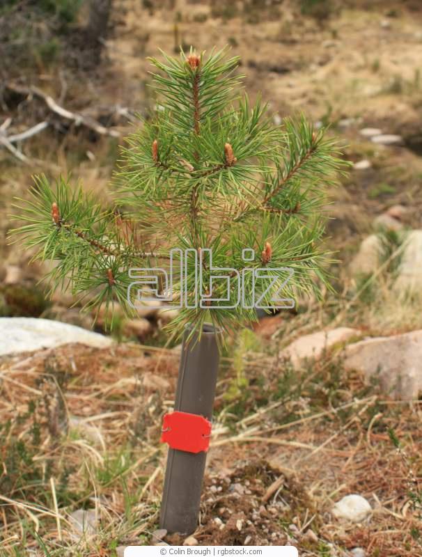 Купить Саженцы деревьев