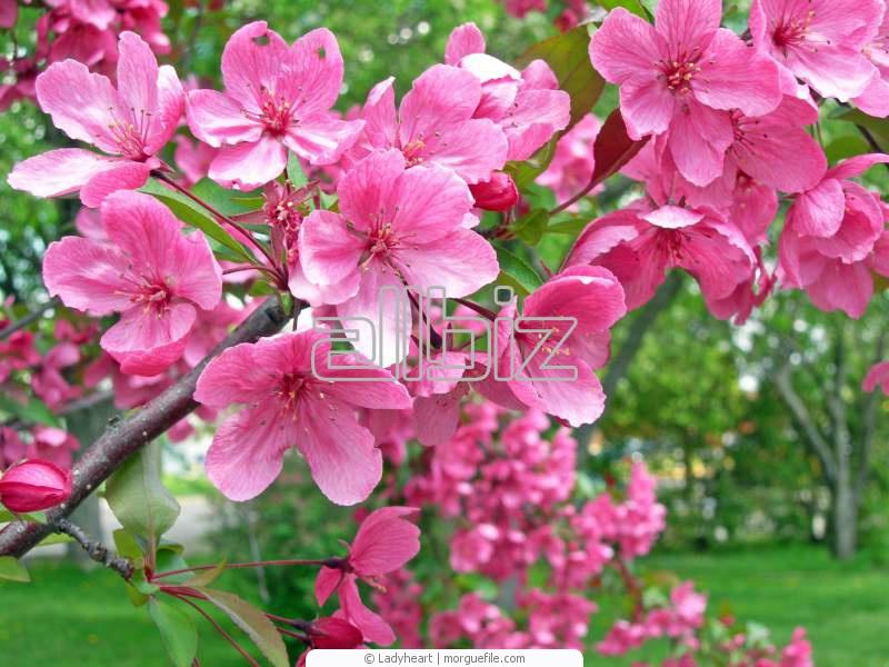 Купить Саженцы декоративных растений