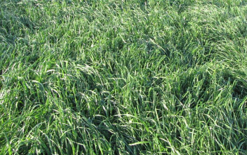 Купить Семена многолетних трав