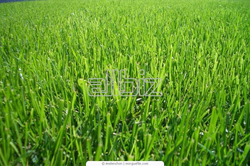 Купить Бобовые и кормовые травы