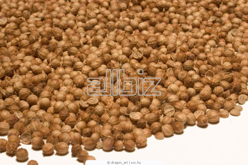 Купить Семена кориандра