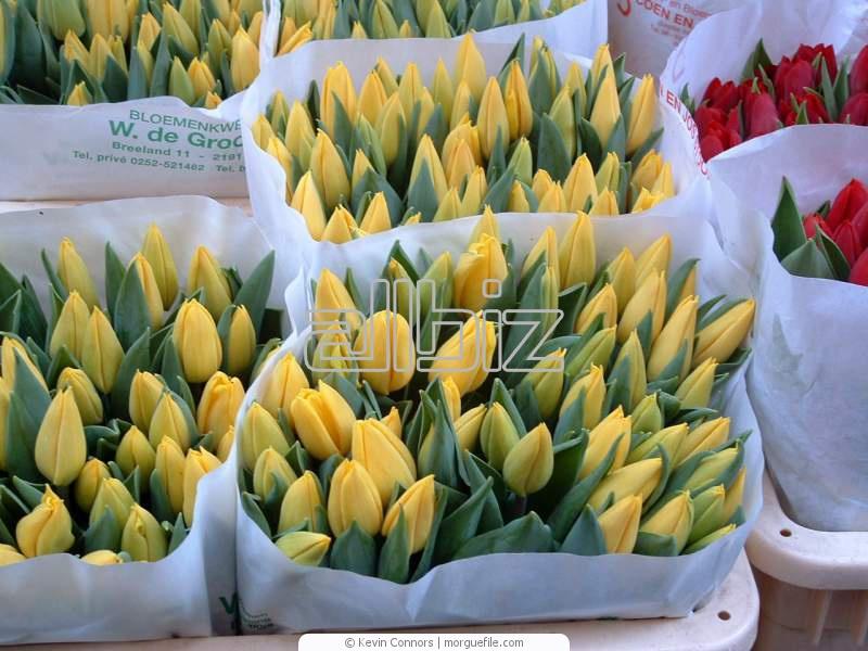 Купить Живые цветы