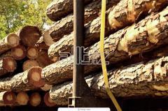 Древесное сырье, древесина