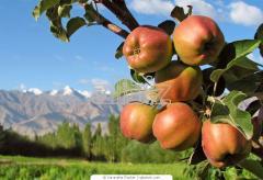 Земельные участки сельскохозяйственного
