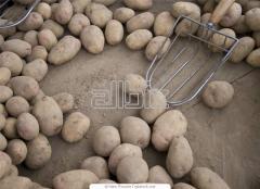 Обработка сельскохозяйственной продукции