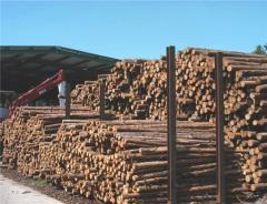 Первичная обработка и сушка древесины