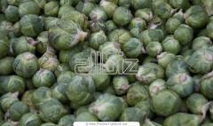 Переработка сельскохозяйственной продукции